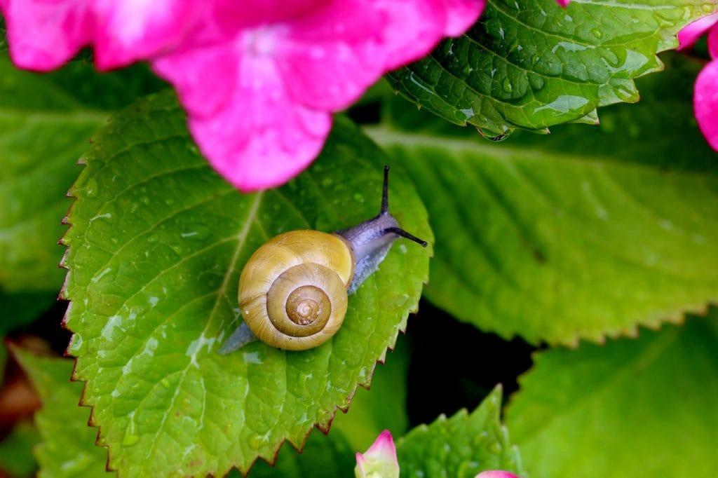 first derm snail slime face mask skin care dermatology health
